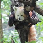 Workshop School of Visual Arts panda rojo